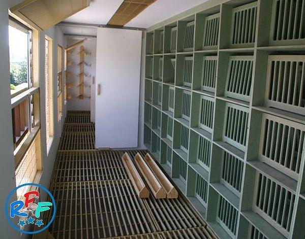 Pigeon Loft Design Ideas And Pigeon Loft Plan Pigeon Loft Pigeon Loft Design Loft Design