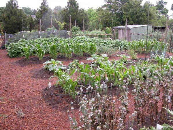 Country Vegetable Garden Ideas