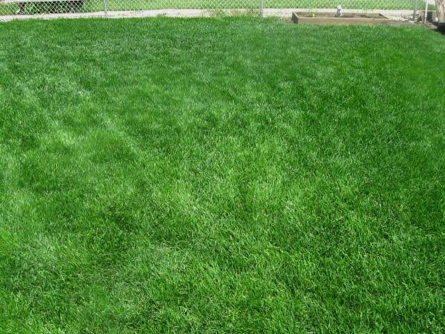 Grass growing tips for a smaller yard with multiple dogs.