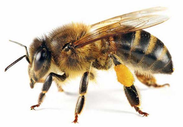 TOUCH esta imagen: Las abejas en Gran Canaria. by olgamaria