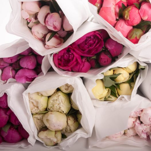 Peonies Delivery