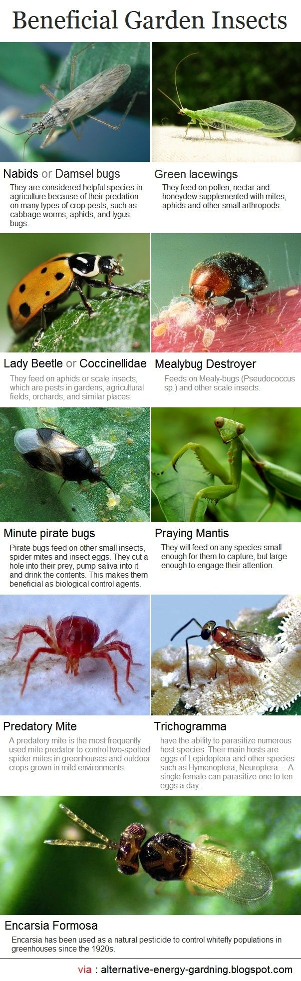 Alternative Gardning: Beneficial Garden Insects