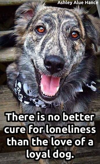 I'm never lonely when my dog is with me! #doglovers