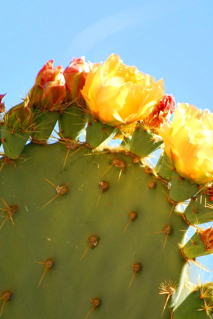 Cactus, The Living Desert, Palm Desert, California