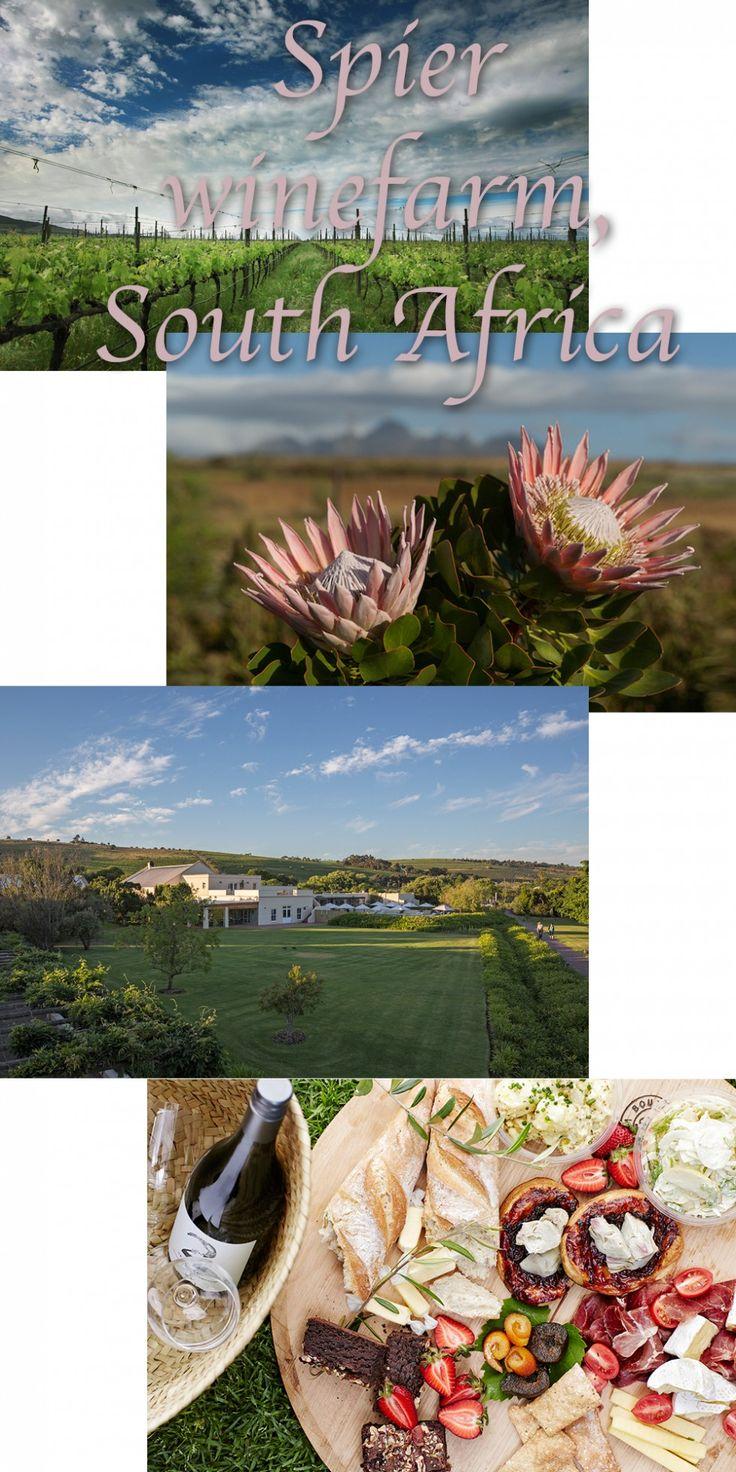 Eksotisk farvestrålende flora, åben himmel og tunge drueklaser. Dovne dage i solen, vippende tæer i poolens svalende vandspejl, bomuldsbløde skyer og delikate smagssammensætninger på tungespidsen. Lyder det tiltalende?  Sådan forestiller jeg mig en tur på vingård i Cape Town. Et vakuum af stilhed og nydelse, som en diskret vuggevise for travle sjæle, hvor kroppen giver sig hen og fokus skærpes, hvor historien fortæller sig selv. @spierwinefarm Media: Guldlog