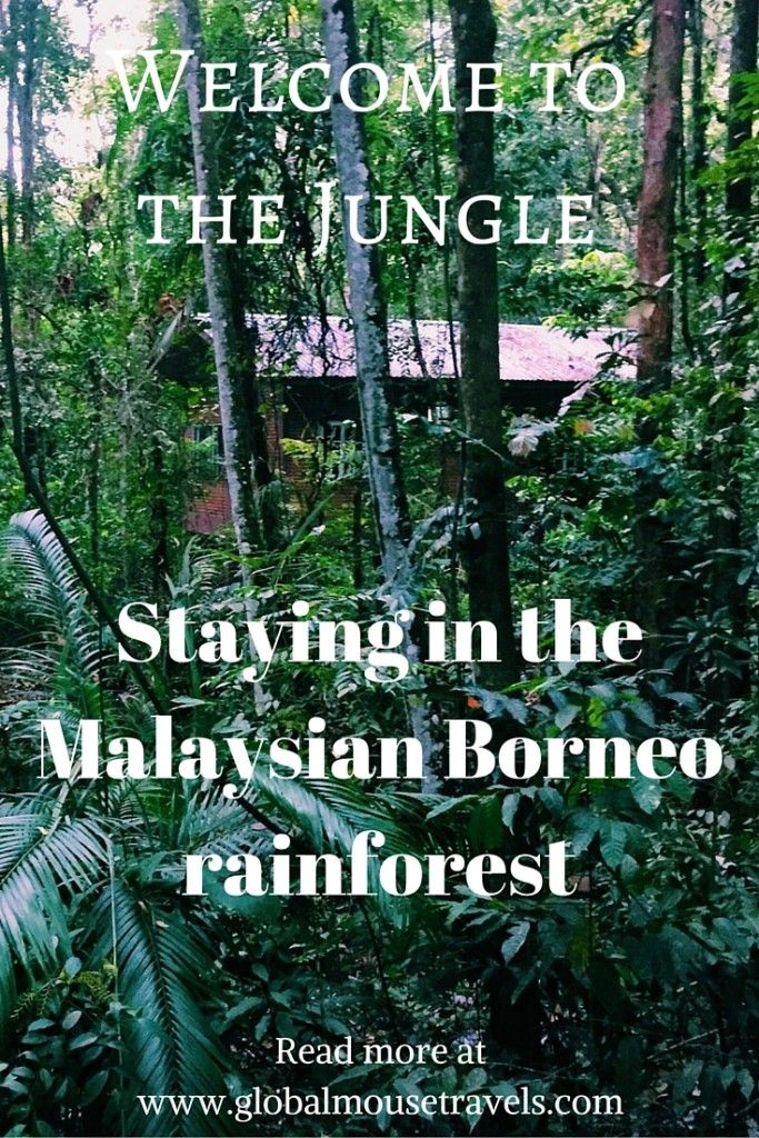 Staying in the middle of the Malaysian rainforest in Borneo is a wonderful experience. Go to sleep listening to the sounds of the jungle and immerse yourself in nature. Read about our stay here and see photos of this beautiful, iin-the-middle-of-the-jungle resort!
