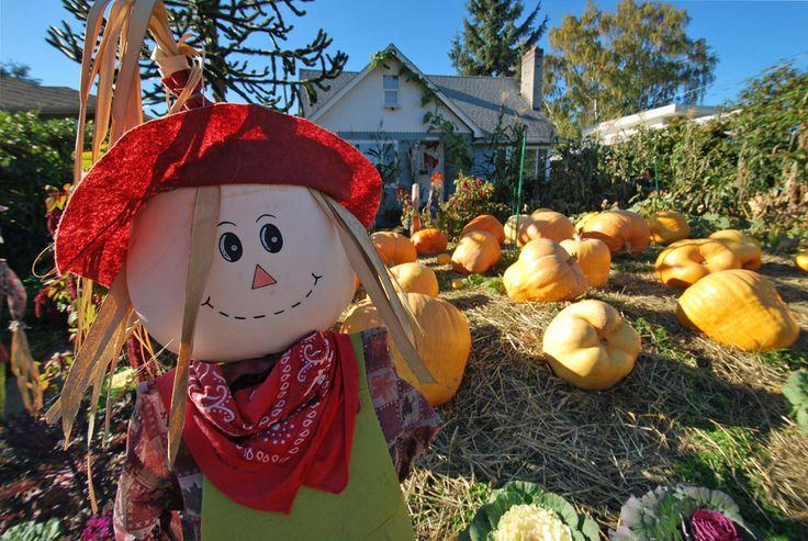 Pumpkin patch fun for Halloween in Seattle!
