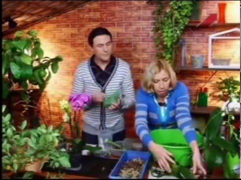 Орхидея.Дачные радости.Марина Рыкалина и Виталий Декабрев.