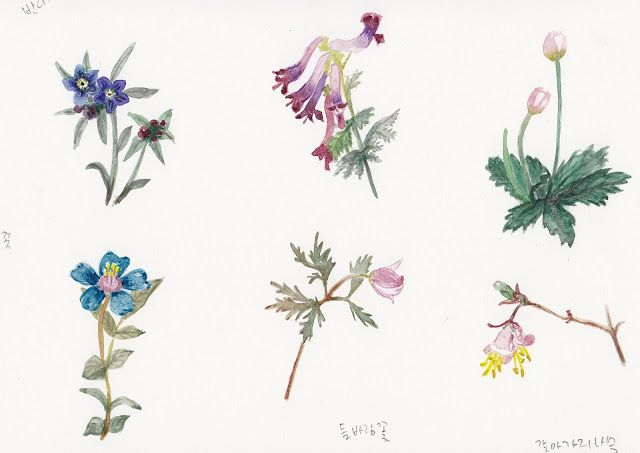 FLOWER FLOWER: 야생화 그려기 연습(plactice to watercolor wild flowers/ la...