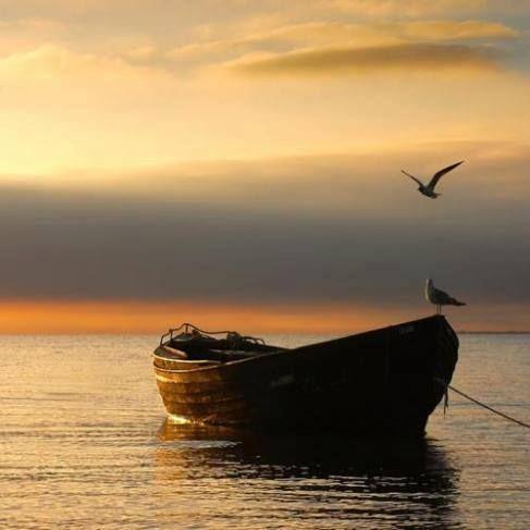 Alzati e guarda il Sole nelle mattine e respira la luce dell'alba. Tu sei la parte delle forza della tua vita. Adesso svegliati, combatti, cammina, deciditi e trionferai nella vita, non pensare mai al destino, perché il destino e il pretesto dei falliti.  Pablo Neruda