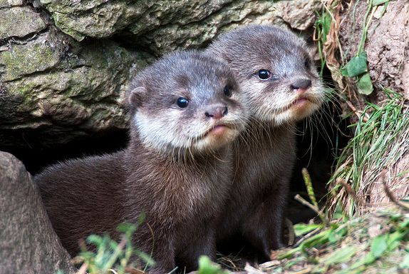 otters holding hands - Google Search