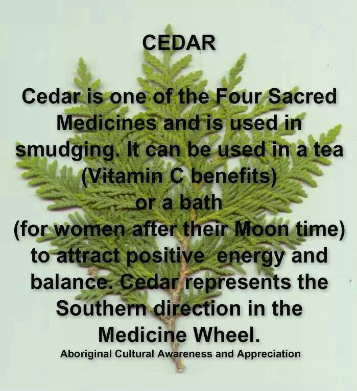 Amazon com   Celestial Seasonings Herbal Tea  Bengal Spice     Count  Pack  of      Herbal Teas   Grocery   Gourmet Food Pinterest
