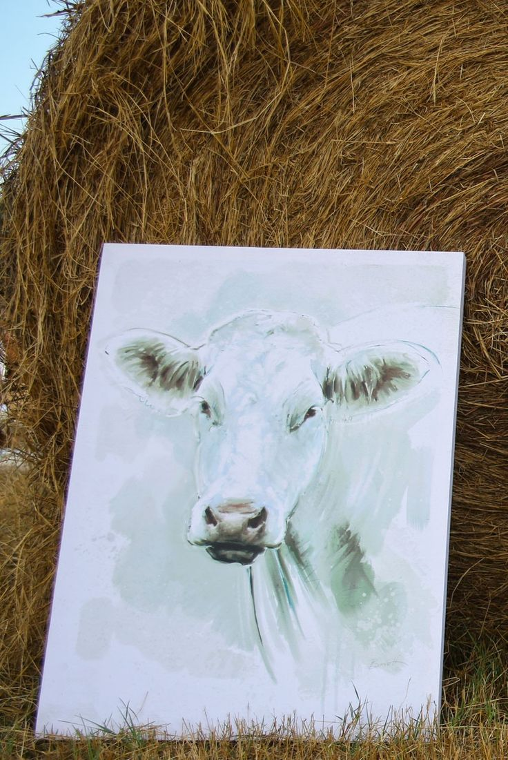 best 25 cow canvas ideas on pinterest cow decor cow art and