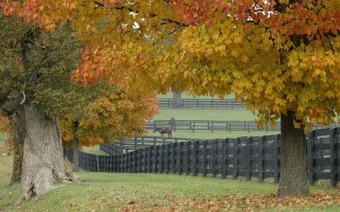 Horses and Autumn