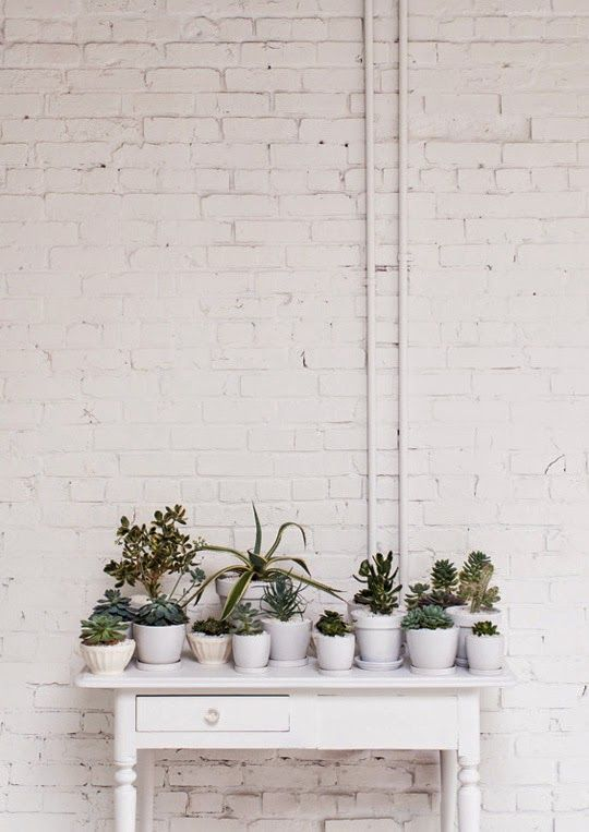 A bunch of plants adds a lot to any room