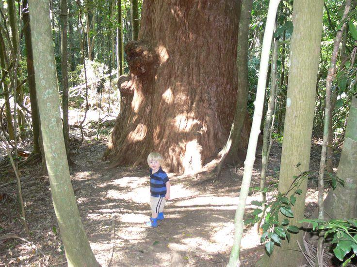 Walking Tracks for Kids | Mount Glorious