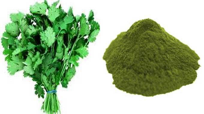 HEAVY METAL DETOX Cilantro and Chlorella can Remove 80% of Heavy Metals from the Body within 42 Days