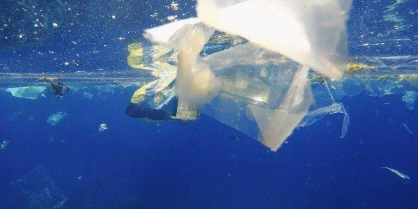 Anche la fossa delle Marianne è inquinata: sostanze tossiche nei crostacei (FOTO E VIDEO)