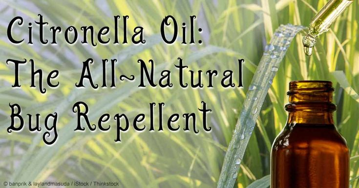 Learn important facts about citronella oil, including its benefits, uses and composition, and what makes it an efficient insect repellent.   http://articles.mercola.com/herbal-oils/citronella-oil.aspx