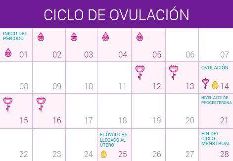 cómo puedes saber qué días son los más fértiles #embarazo #embarazada