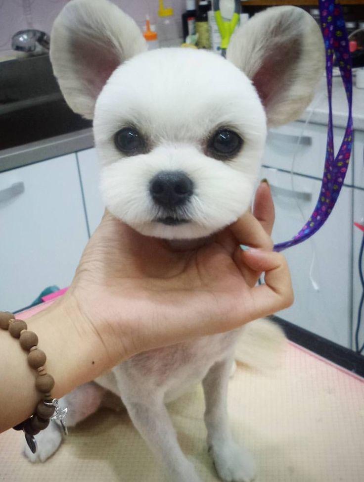 sitio web blanco estilo perrito en Lérida