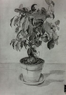 加須のIさん 植物のデッサン続き - 絵画指導 菅野公夫のブログ