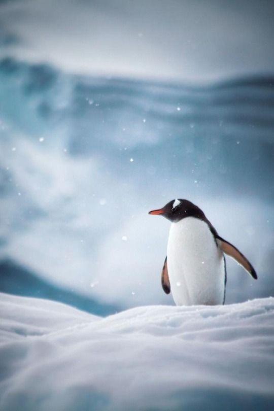 "renamonkalou: "" When snow falls, the whole world changes """