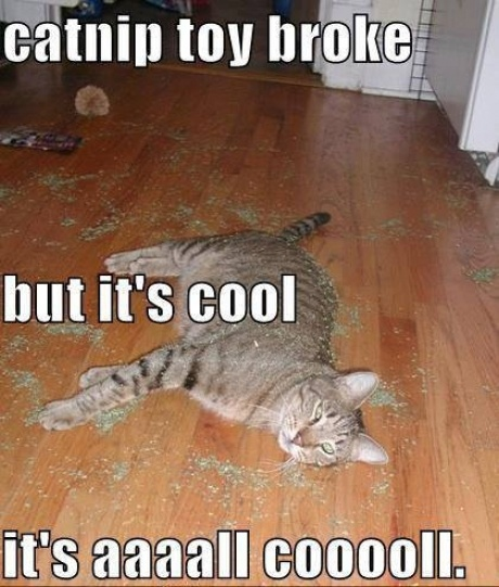 Funny Pictures About Catnip Toy Broke Oh And Cool Pics About Catnip Toy Broke Also Catnip Toy Broke