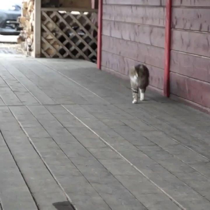 огня гифка кот убегает следят