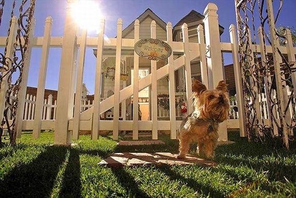 Victorian doggie mansion