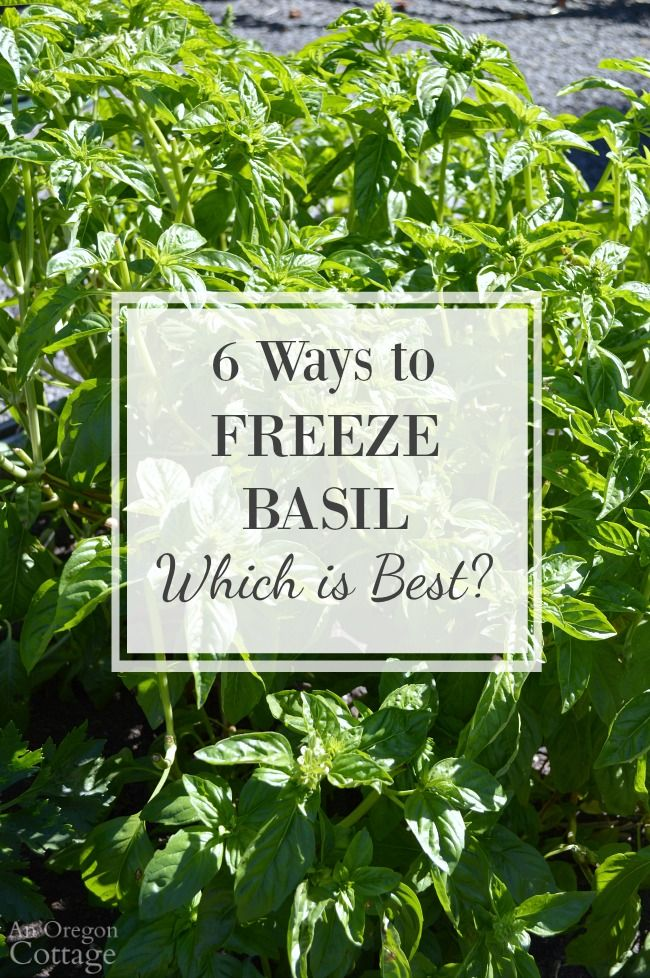 6 ways to Freeze Basil leaves- which is best? After testing 6 popular methods 2…
