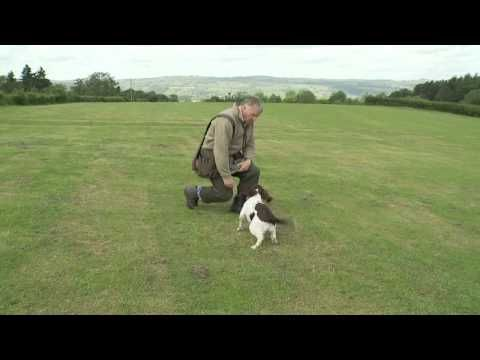 Kevin Powell from Shropshire Gundogs www.shropshire-gundogs.co.uk helps solve the very frustrating problem of the dog dropping the retrieve before the delivery. For other hints and tips videos visit www.shropshire-gundogs.co.uk