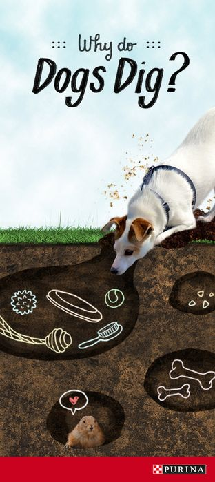 Ever wonder why it seems like dogs are always digging? They could be burying dog toys, bones or even smelling a mouse below! Read more about why your dog digs here, including how to stop destructive dog digging!