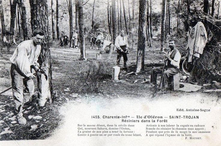 Les résiniers en forêt de Saint-Trojan - Ile d'Oléron vintage, Charente-Maritime, France