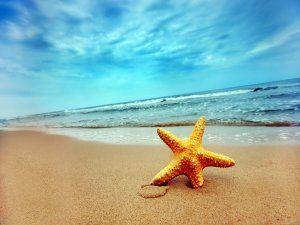 Estrella de mar en la arena de la playa