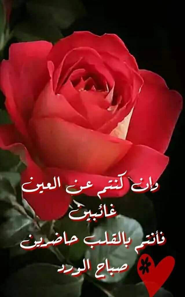 اي والله ماتغيبو ولا تكاا Beautiful Morning Messages Good Morning Roses Good Morning Beautiful Images