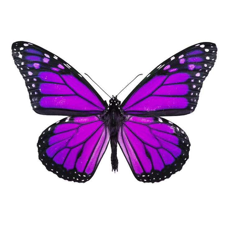 19 best images about tattoo on pinterest white tattoos for Purple butterfly tattoo