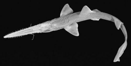 Топ-10: самые странные животные, обнаруженные за последние 10 лет