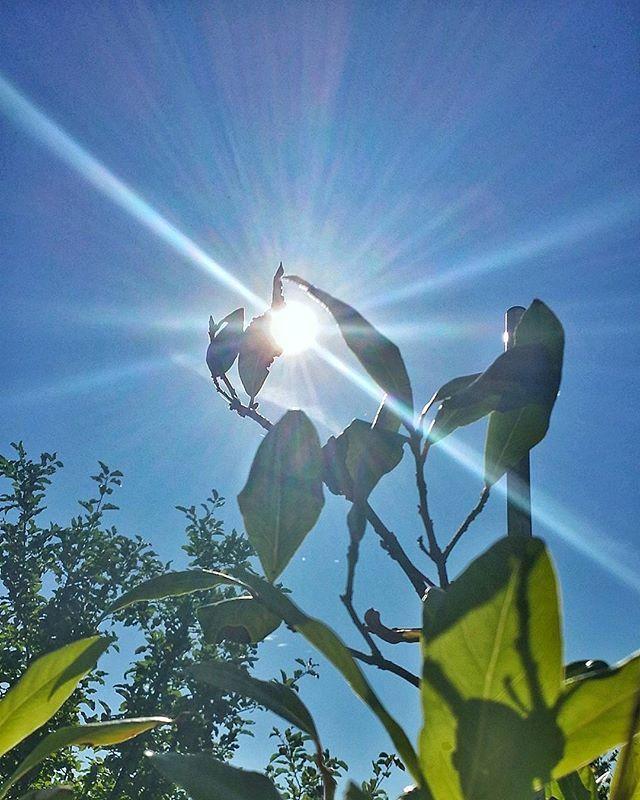 Słonko i ja witamy pięknie 🌞  #dzieńdobry#goodmorning#gutenmorgen#niebo#sky#himmel#słońce#sun#sonne#piękno#beautiful#beauty#naturalbeauty#photography#samsung👋😎🌞 Natural Beauty from BEAUT.E