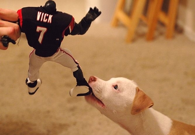 Take that Michael Vick!Pitti, Dogs Pics, Animal Humor, Pitbull, Funny, Pit Bull, Dogs Photos, Michael Vicks, Chew Toys