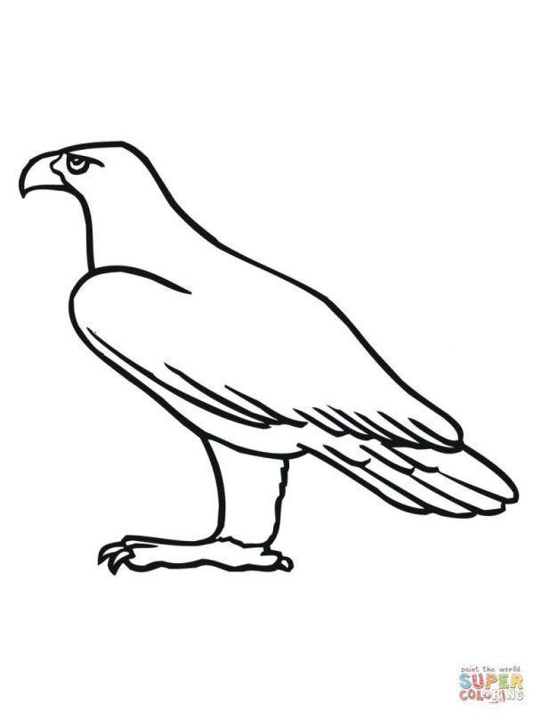 Aguila Real Dibujos Para Colorear Aguila Real Dibujo Aguila