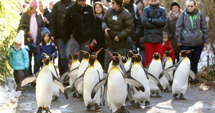 «Να περπατάτε σαν… πιγκουίνοι για να μην γλιστράτε στον πάγο»