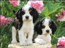 Best 25 free screensavers and wallpapers ideas on - Free cocker spaniel screensavers ...