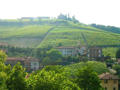Summer days in Barolo