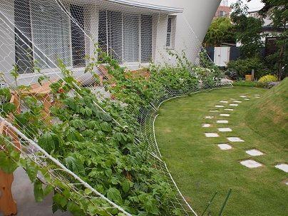 GREEN Project 通信 2014、緑と暮らす楽しさという点と定量観測を交えながらお伝えします。 緑のカーテンの成長過程2014 今年の緑のカーテンは「琉球アサガオ(ホワイト)と西洋アサガオ(ホワイト)」で挑戦しました。 琉球アサガオはクリス...