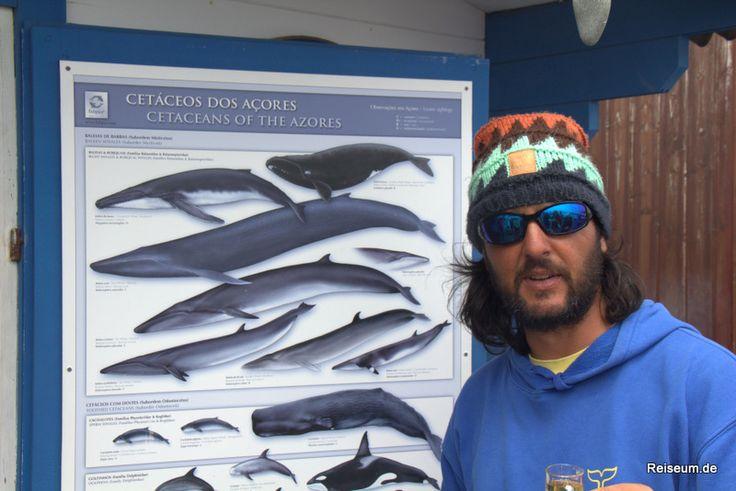 Azoren - Whalewatching im Atlantik