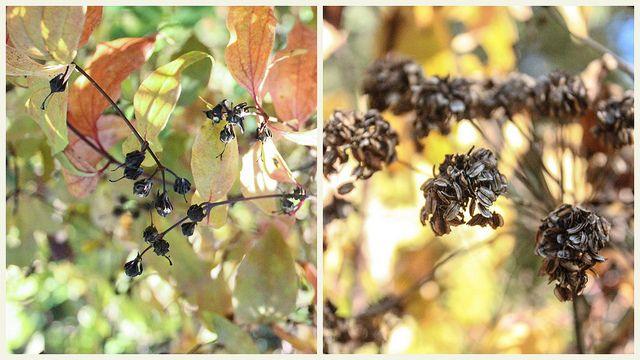 Autumn details | Flickr - Photo Sharing!