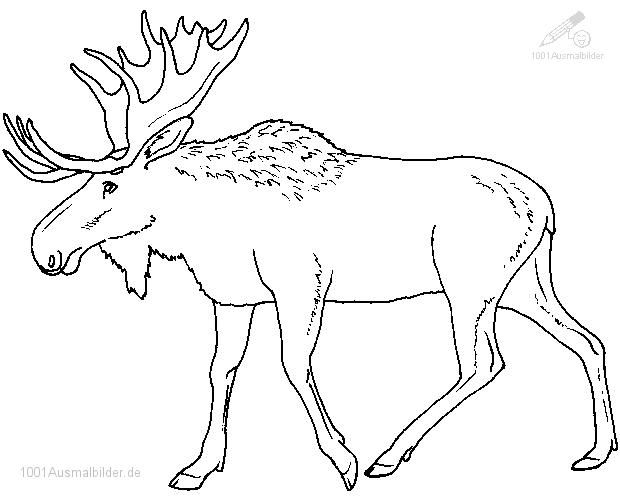 Beste Von Inspiration Weihnachtsmuetze Ausmalbild Fur Kinder Kostenlos Malvorlagen Tiere Ausmalen Ausmalbilder Kinder