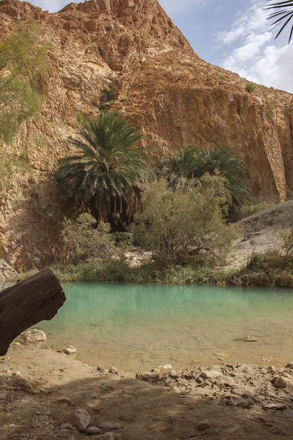 Photo de Oasis et gorges de Chebika : écrire un commentaire - Tozeur - 7600508