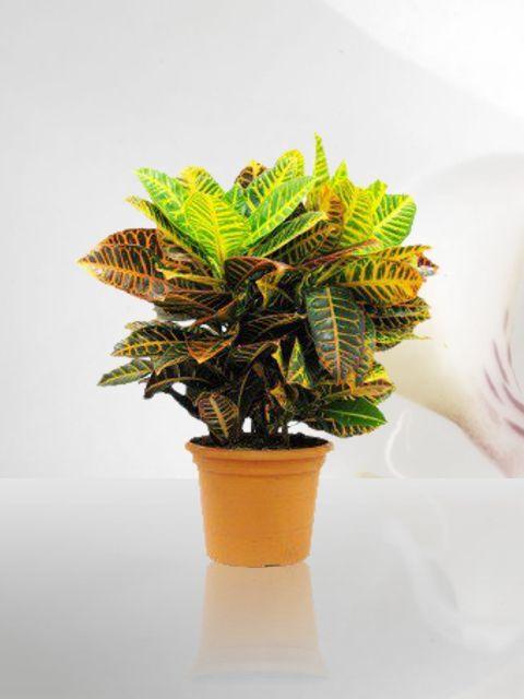10 mejores im genes de venta de plantas de ornato for Viveros de plantas de ornato